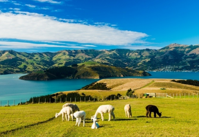 新西兰研究生留学怎么申请?需要满足什么条件?